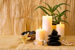 Composizione in bellezza con la pianta dell'aloe Fotografia Stock