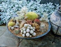 Composizione con il cactus nella serra Fotografia Stock