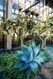 Composizione con il cactus nella serra Fotografie Stock Libere da Diritti