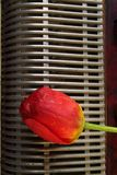 Composizione con la fisarmonica ed i fiori rossi del tulipano Fotografia Stock Libera da Diritti