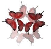 Composizione con le farfalle illustrazione vettoriale