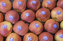 Composizione con le mele fresche fotografie stock libere da diritti
