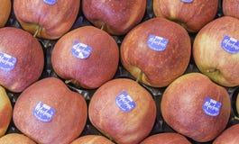 Composizione con le mele fresche fotografie stock