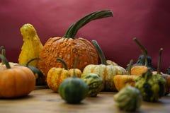 Composizione con le zucche di Halloween Immagine Stock