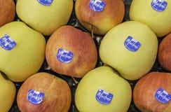 Composizione con varietà differente delle mele al mercato Marlene, sopportata nel 1995, è una del prima e marche più famose di me immagini stock libere da diritti