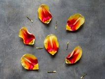Composizione creativa con i petali colorati del tulipano, spazio della copia Concetto minimo della primavera Il giorno delle donn immagine stock libera da diritti