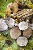 Composizione d'autunno con i funghi Fotografia Stock