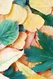 Composizione d'autunno nei fogli. Immagine Stock