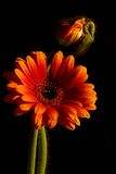 Composizione dei fiori Fotografia Stock