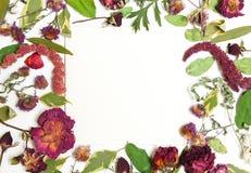 Composizione dei fiori secchi, del rosa, delle rose rosse e delle foglie verdi Fotografia Stock Libera da Diritti