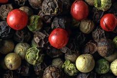 Composizione dei granelli di pepe misti Fotografia Stock Libera da Diritti