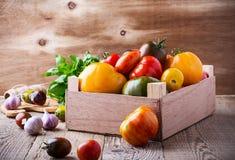 Composizione dei pomodori variopinti nel tempo di raccolto di estate Fotografia Stock Libera da Diritti