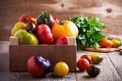 Composizione dei pomodori variopinti nel tempo di raccolto di estate Fotografia Stock