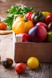 Composizione dei pomodori variopinti nel tempo di raccolto di estate Immagine Stock