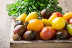 Composizione dei pomodori variopinti nel tempo di raccolto di estate Fotografie Stock Libere da Diritti