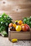 Composizione dei pomodori variopinti nel tempo di raccolto di estate Immagine Stock Libera da Diritti