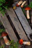 Composizione del boletus dello spiritello malevolo in ciotola su fondo di legno Pagina dai funghi selvaggi commestibili copi lo s Fotografia Stock