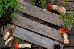 Composizione del boletus dello spiritello malevolo in ciotola su fondo di legno Pagina dai funghi selvaggi commestibili copi lo s Immagini Stock Libere da Diritti