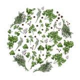 Composizione del cerchio delle erbe e delle spezie differenti Inchiostro disegnato a mano e schizzo colorato isolati su fondo bia royalty illustrazione gratis