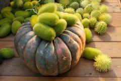 Composizione del cetriolo e della zucca selvaggi Immagini Stock Libere da Diritti