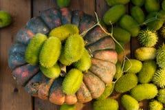 Composizione del cetriolo e della zucca selvaggi Fotografia Stock Libera da Diritti