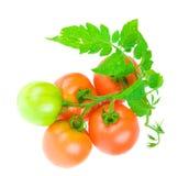 Composizione del pomodoro isolata Fotografie Stock Libere da Diritti