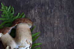Composizione del porcini su fondo di legno Funghi selvaggi commestibili bianchi copi lo spazio per il vostro testo Immagine Stock