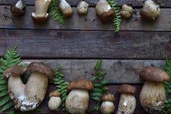Composizione del porcini su fondo di legno Pagina dai funghi selvaggi commestibili bianchi copi lo spazio per il vostro testo Fotografia Stock