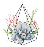 Composizione dell'acquerello dei cactus e dei succulenti nel florariume geometrico di terrari isolato su fondo bianco illustrazione vettoriale