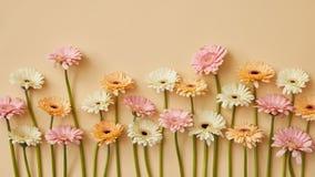 Composizione della primavera delle gerbere fresche su un fondo di carta giallo Immagine Stock Libera da Diritti