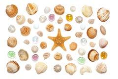 Composizione delle conchiglie e delle stelle marine esotiche su un fondo bianco Fotografie Stock
