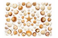 Composizione delle conchiglie e delle stelle marine esotiche su un fondo bianco Fotografie Stock Libere da Diritti