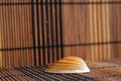 Composizione delle conchiglie e delle stelle marine esotiche su un fondo di legno Fotografia Stock Libera da Diritti