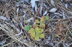 Composizione delle ghiande e della terra nella foresta di autunno Fotografie Stock