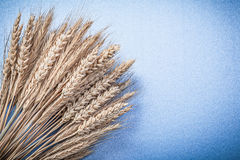 Composizione delle orecchie della segale del grano sullo spazio blu della copia del fondo Immagini Stock