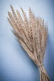 Composizione delle orecchie legate con corde della segale del grano su fondo blu Immagine Stock Libera da Diritti