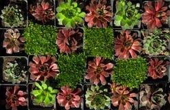 Composizione delle piante per la casa e la via inverdimento del tetto Progetto ecologico del tetto verde fotografie stock