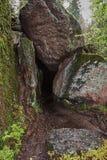 Composizione delle pietre naturali nella foresta Fotografia Stock Libera da Diritti