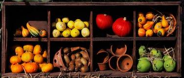 Composizione delle zucche ed estate e zucche Fotografie Stock Libere da Diritti