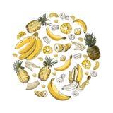 Composizione di colore del cerchio dei frutti della banana e dell'ananas Interi ed elementi affettati isolati su fondo bianco royalty illustrazione gratis