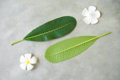 Composizione di concetto del trattamento della stazione termale, fine su della plumeria bianca o fiori del frangipane su fondo di Immagine Stock
