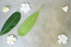 Composizione di concetto del trattamento della stazione termale, fine su della plumeria bianca o fiori del frangipane su fondo di Fotografie Stock Libere da Diritti