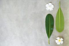 Composizione di concetto del trattamento della stazione termale, fine su della plumeria bianca o fiori del frangipane su fondo di Fotografia Stock Libera da Diritti