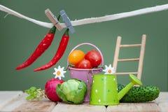 Composizione di piccoli frutta e verdure ed accessori del giardino Bio- verdura fresca organica, fotografie stock libere da diritti