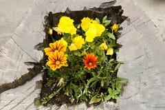 Composizione in Floreal Fotografia Stock Libera da Diritti