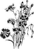 Composizione floreale d'annata con i wildflowers Fotografie Stock Libere da Diritti
