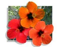 Composizione floristica, fiori rossi Fotografia Stock Libera da Diritti