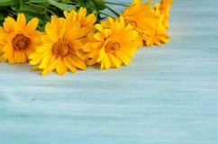 Composizione gialla nei fiori su fondo di legno Primavera, pasqua, bithday fotografia stock libera da diritti