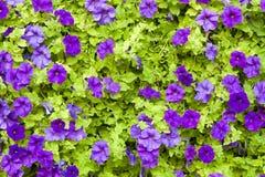 Composizione lilla e verde Fotografia Stock Libera da Diritti
