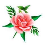 Composizione luminosa dell'acquerello del rosa, delle rose di corallo e delle foglie Modello per gli inviti di nozze disegnati a  royalty illustrazione gratis